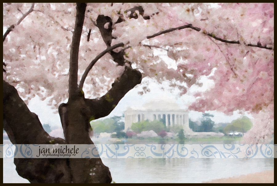 IMG_4215Cherry Blossom Art Pictures Washington DC For Sale