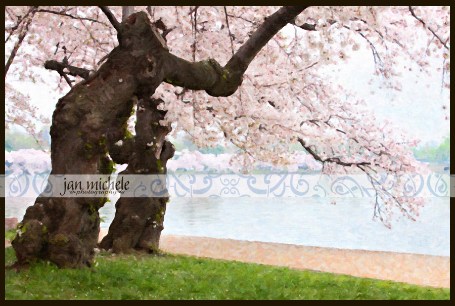 combo 2Cherry Blossom Art Pictures Washington DC For Sale