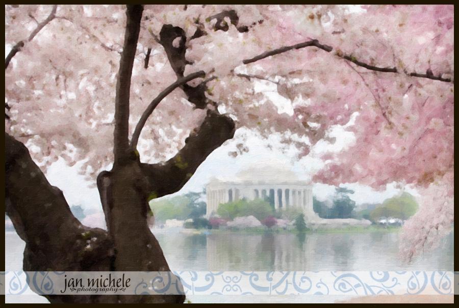 Cherry Blossoms Paint 01